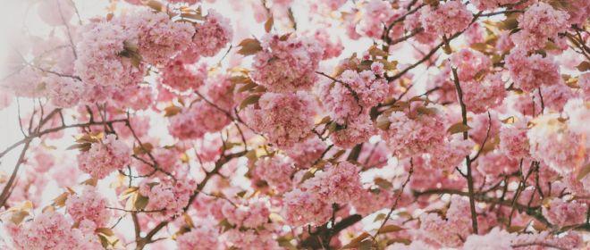 10 Tips for Surviving Allergy Season